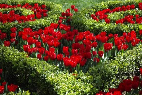 Meadowlark Botanical Garden